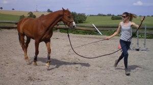 Clothilde Colombo  - monitrice équitation éthologique