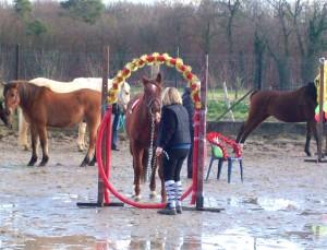 Cerceau Horse Agility