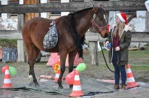 Arrêt sur Bâche et baluchons - Horse Agility