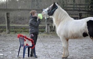 Désensibilisation au ballon - Horse Agility