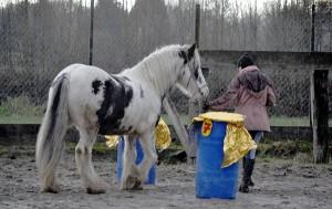 Passage de fûts  étroit  Horse Agility