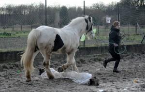 Saut - Horse Agility