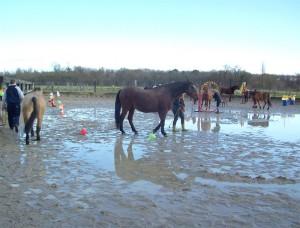 Parcours d'Horse Agility